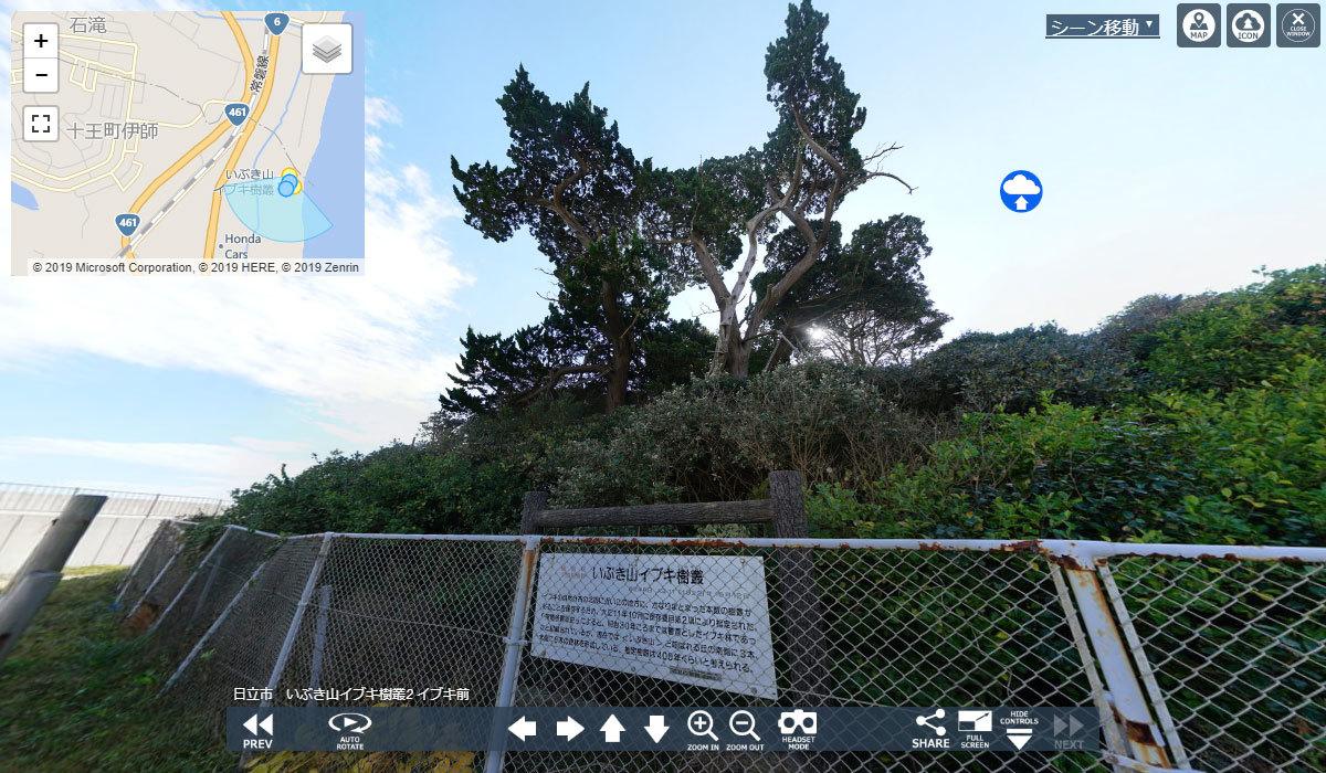 日立市おすすめ地理スポットのイブキ樹叢