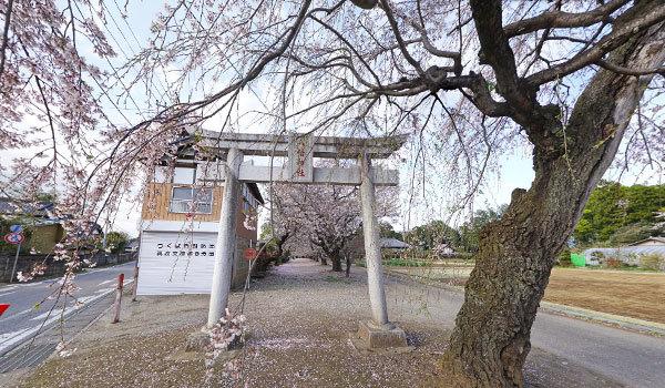 つくば市の上菅間八幡神社の桜・花見スポット