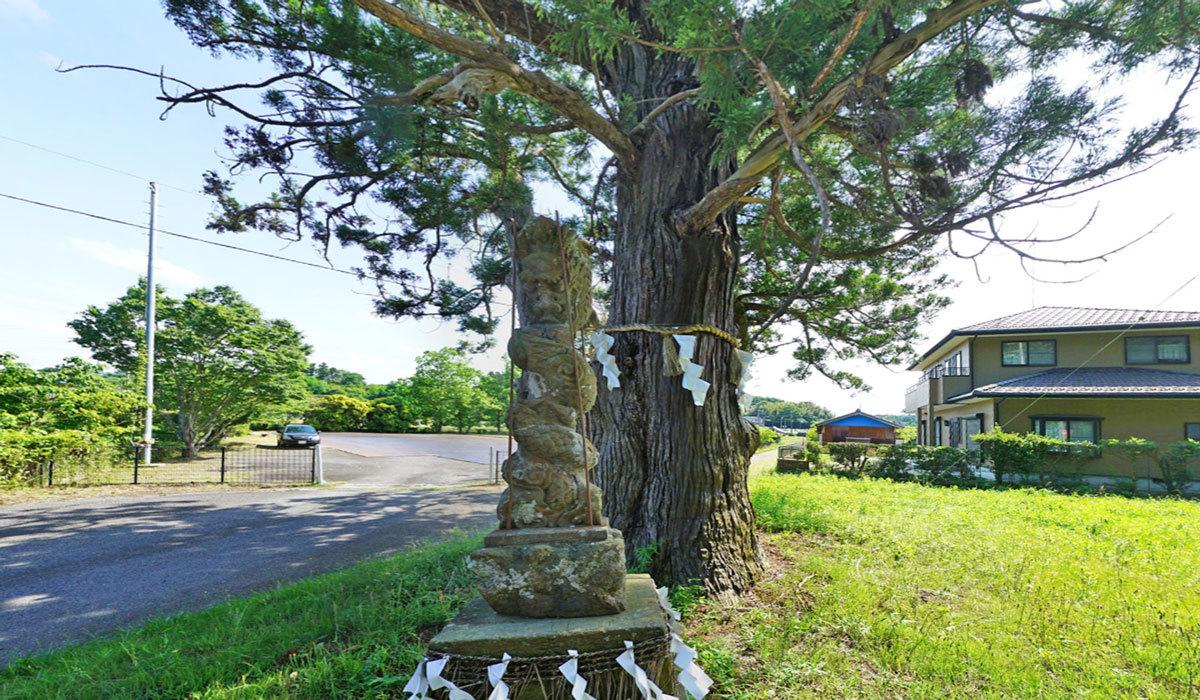稲敷市巨木おすすめスポットの大杉神社臨時駐車場の大杉