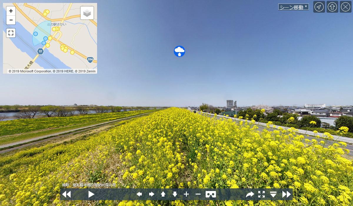 境町の季節おすすめ観光スポットの利根川菜の花畑