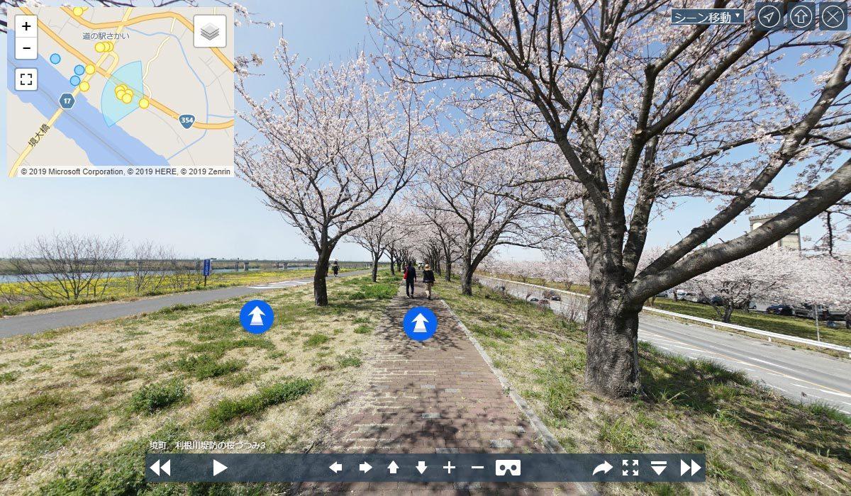 境町の季節おすすめ観光スポットの利根川堤防桜並木