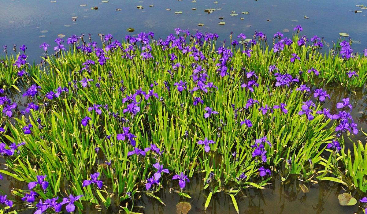 利根町おすすめ季節観光スポットの利根親水公園