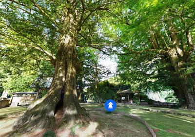名木・巨木・天然記念物の観光VRツアー