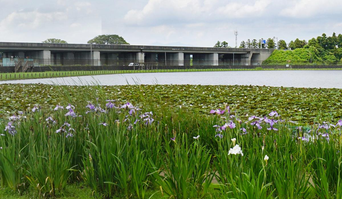土浦市おすすめ季節観光スポットの乙戸水生植物園