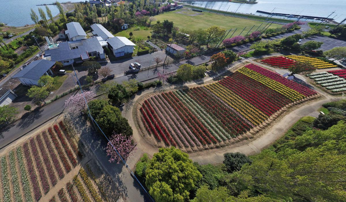 和田公園 チューリップの観光案内360°パノラマ写真VRツアー