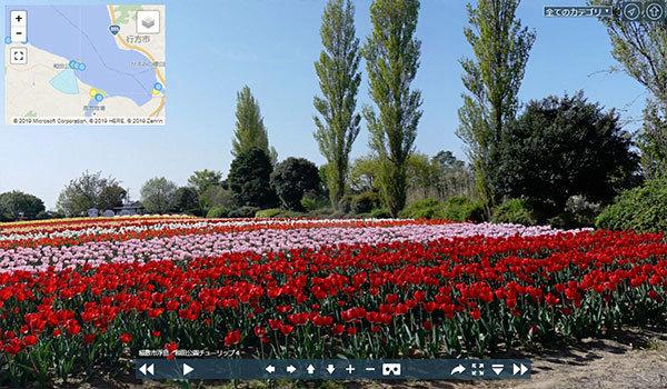 和田公園のチューリップのVRツアー写真